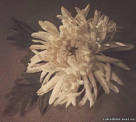 Хризантема махровая полушаровидная